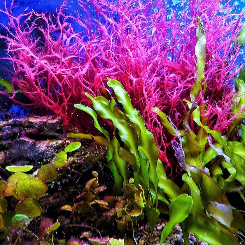 красивое фото водорослей
