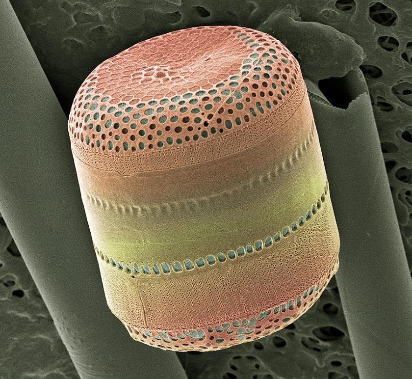 диатомит фото