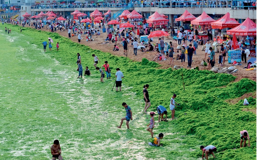 водоросли фото Китай