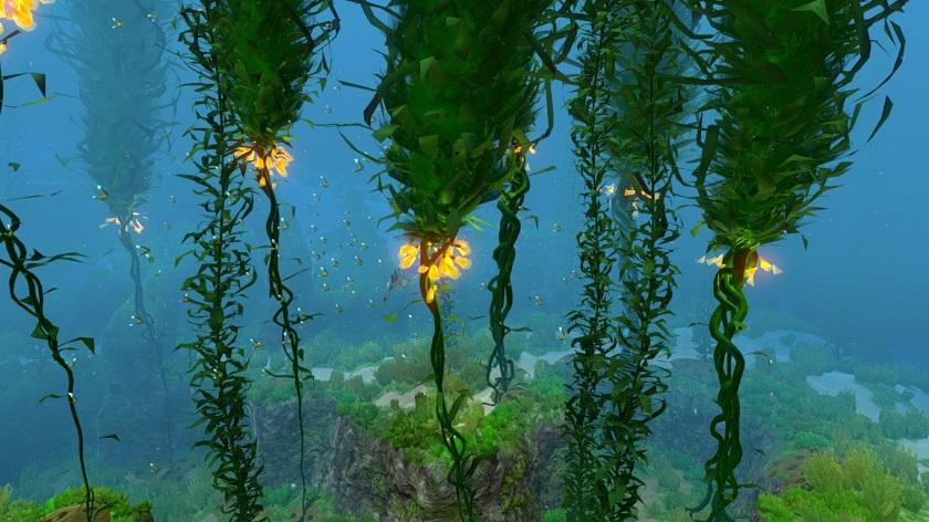 водоросли фото лес